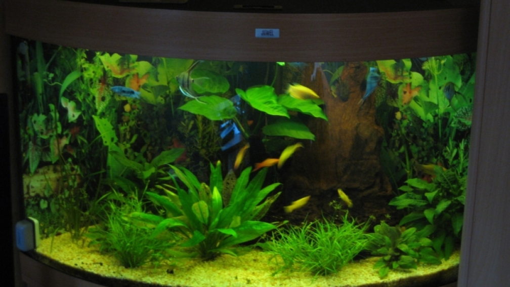 Example no 13537 from the category community tanks for Filtre exterieur aquarium eheim