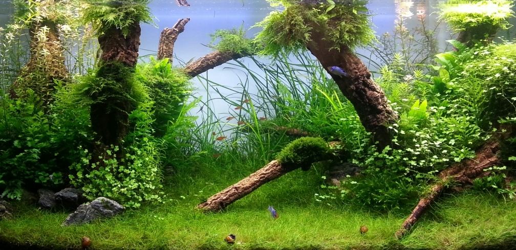 Example No 23365 from the category aquascaping