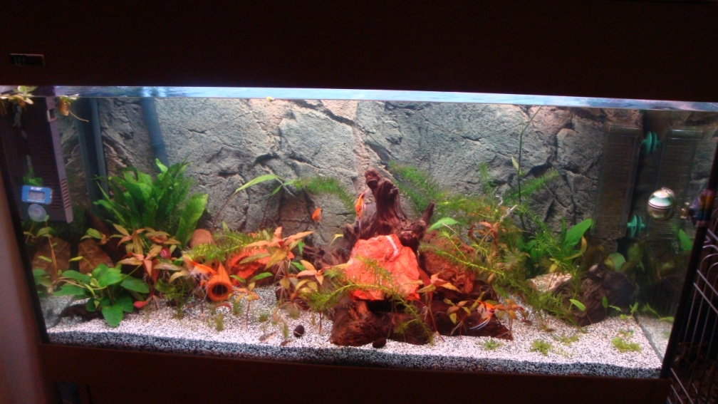 Example no 24125 from the category south america for Aquarium 200l