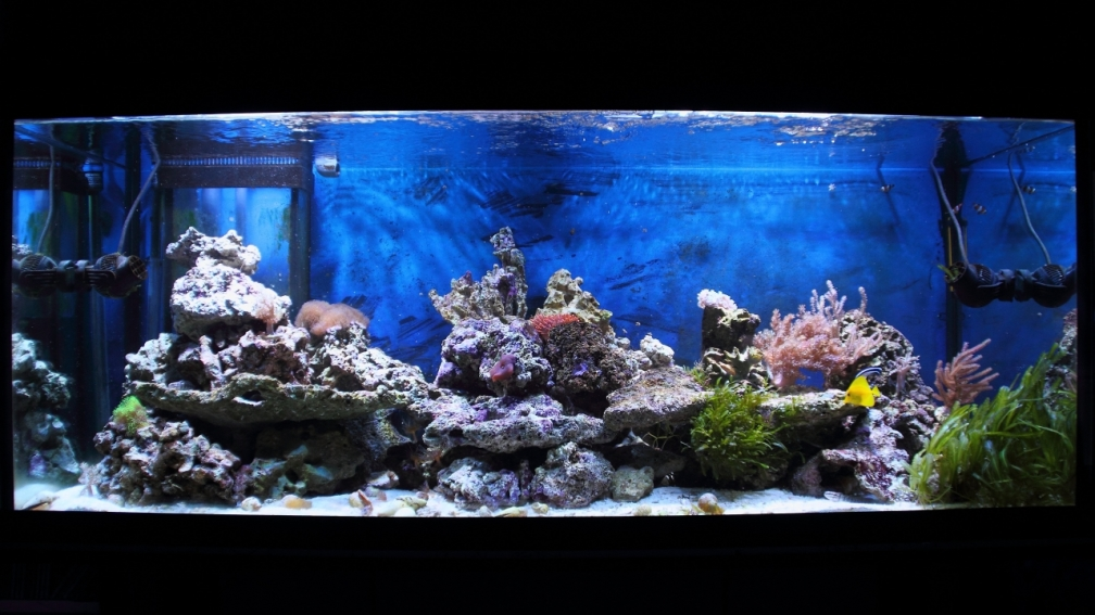 Aquarium Hauptansicht von Micha's Great Reef Challenge