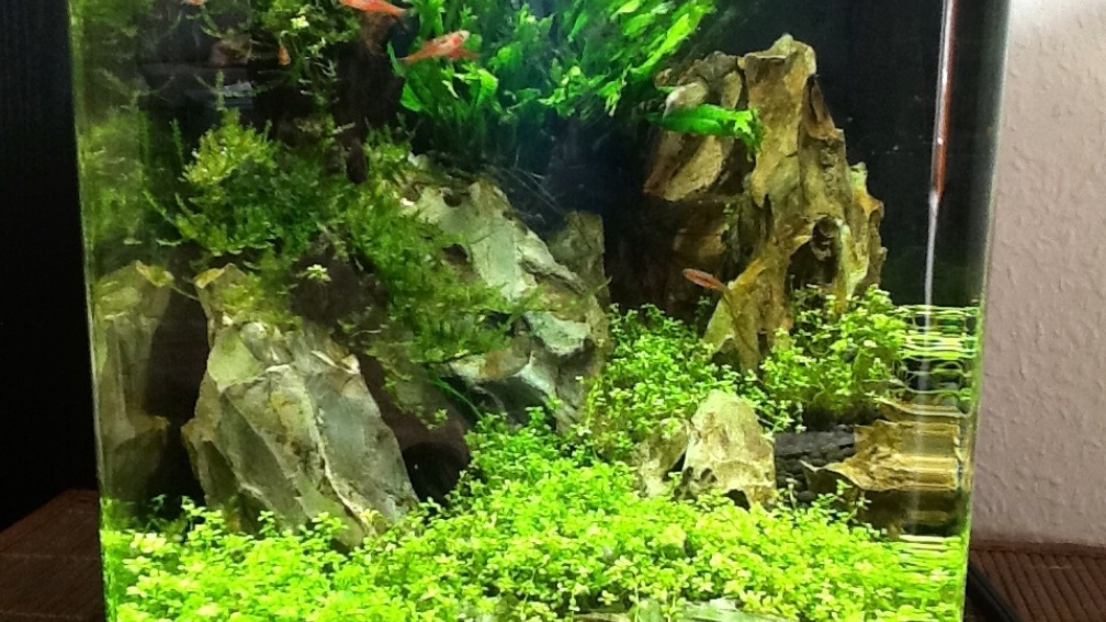 Example No 26509 from the category aquascaping