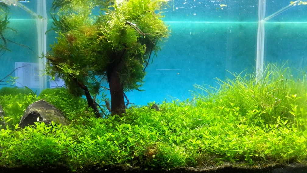Example No 26988 from the category aquascaping