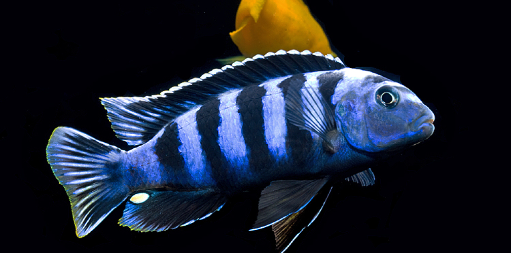 Example No 30856 From The Category Lake Malawi