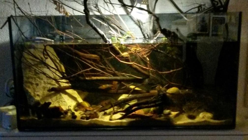 How To Prepare Glass For Aquarium Decoration