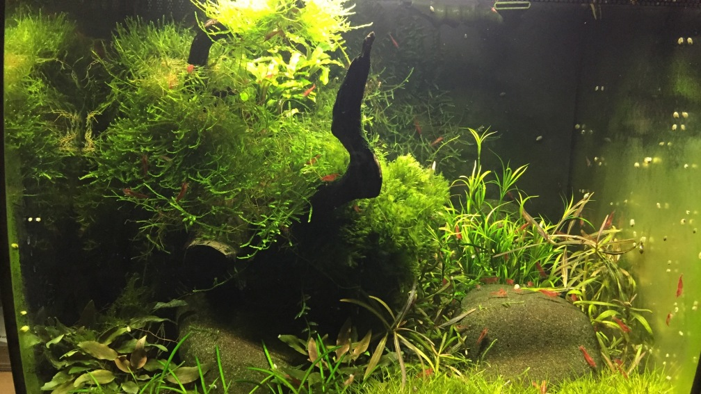Aquarium Hauptansicht von Red Fire Refugium
